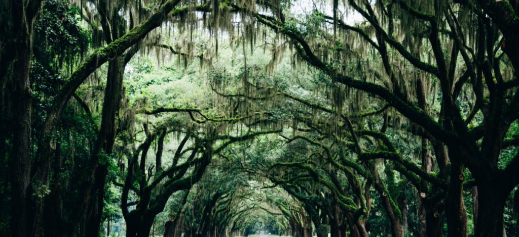 Airbnb Savannah Georgia